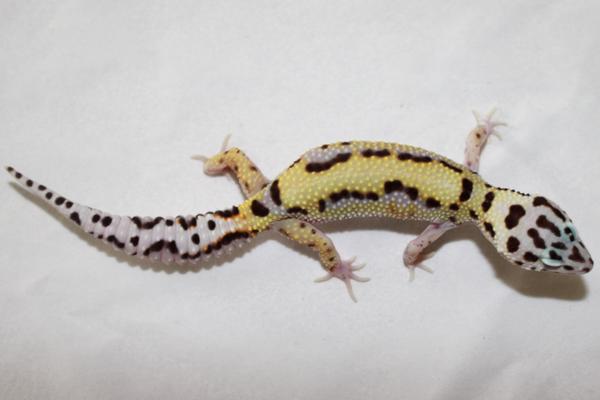 mack-bold-stripe-female