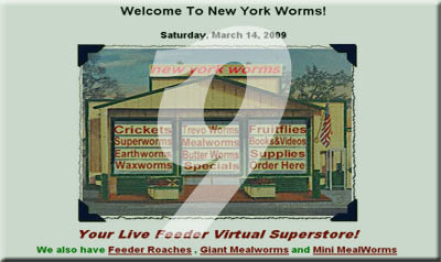 New York Worms