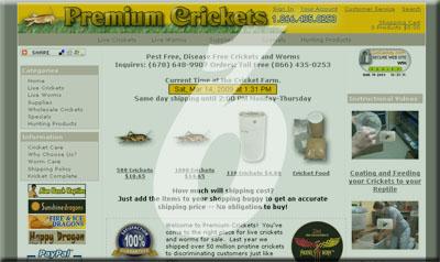 Premium Crickets