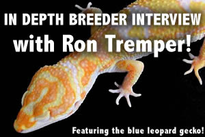 Interview with Ron Tremper of LeopardGecko.com