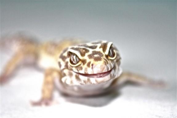 albino-smile-by-chris-van-aken