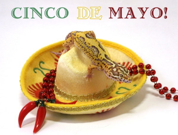 cinco-de-mayo-by-brittney-gougeon
