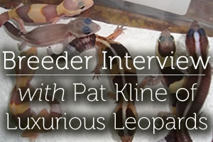 Interview with Pat Kline of Luxurious Leopards