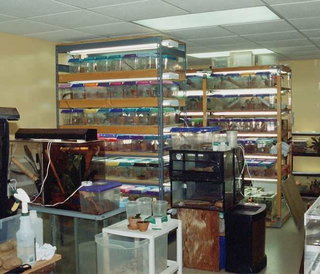 gecko-room