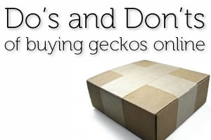 Do's & Don'ts of Buying Geckos Online