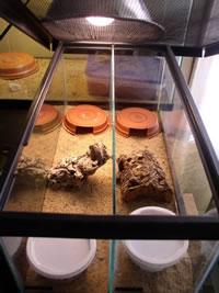 Cage for raising small Australian geckos.