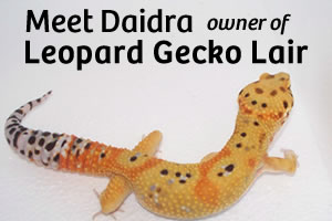 Small Breeder Interview: Daidra from Leopard Gecko Lair