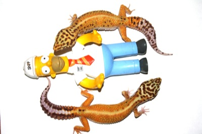 leopard geckos and simpson
