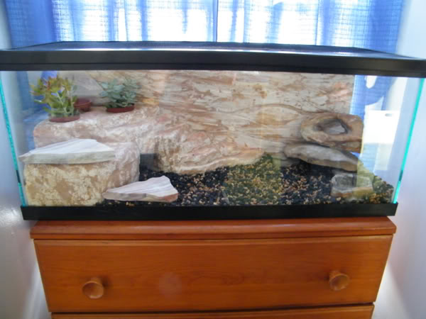 Finished DIY Rock Enclosure
