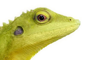 Two New Lizard Species Discovered