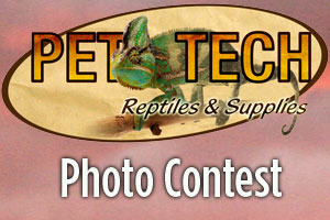 Pet-Tech Products Photo Contest: Submissions Open