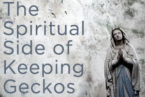 The Spiritual Side of Keeping Geckos