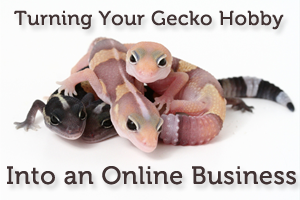 Turning Your Gecko Hobby into an Online Business