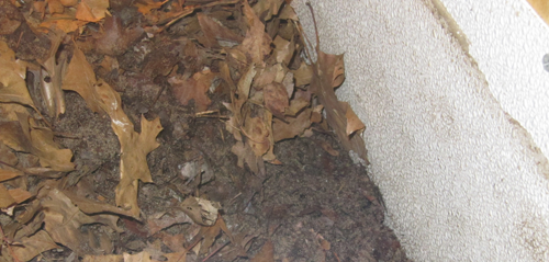 bio-active reptile substrate