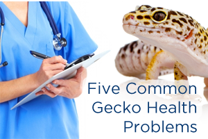 5 Common Gecko Health Problems
