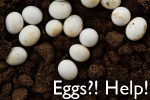 Eggs?!  Help!