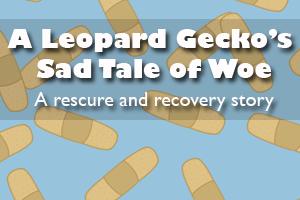 A Leopard Gecko's Sad Tale of Woe