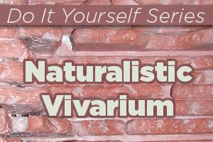 Constructing a Naturalistic Desert Vivarium Reptile Enclosure