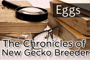 Chronicles of a New Breeder: Eggs!
