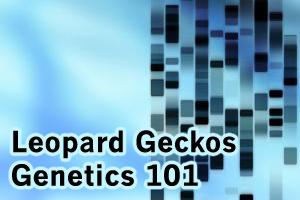Fun with Hets: Leopard Geckos Teach Genetics 101