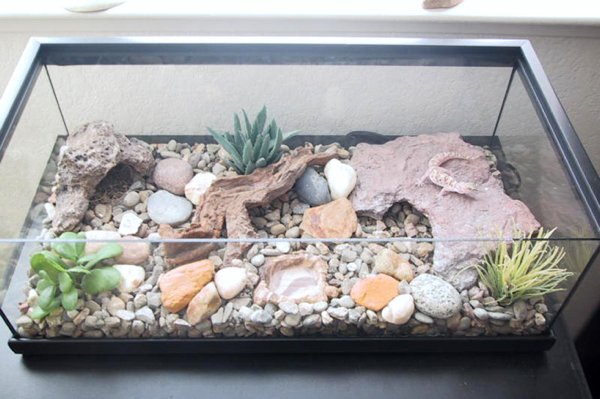 banded gecko enclosure