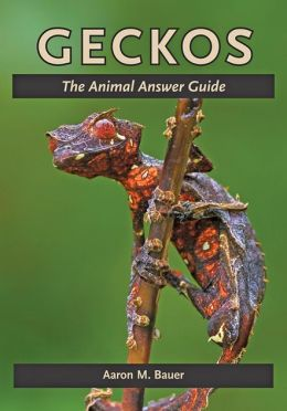 Geckos Book Review