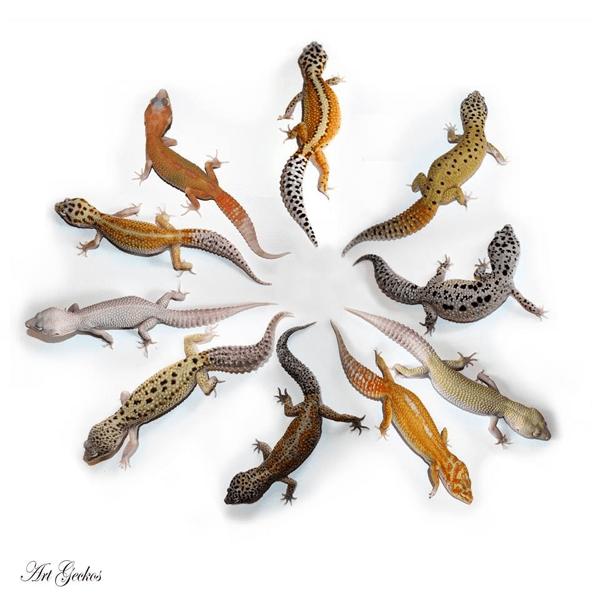 Art Geckos.indexed
