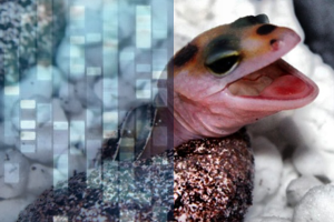 Enigma Syndrome in Leopard Geckos: An Autosomal Dominant Disorder