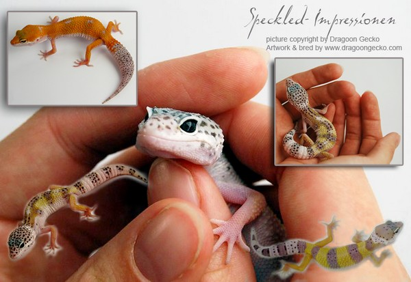 speckled project