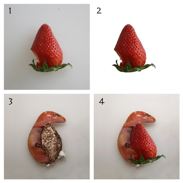 (C)strawberrygecko