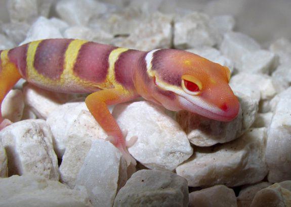 Mandarin Tangerine Noir Desir Bell Albino