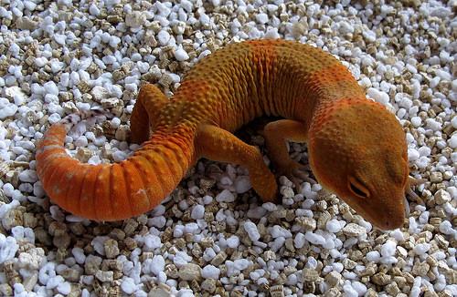 Mandarin Tangerine Noir Desir male