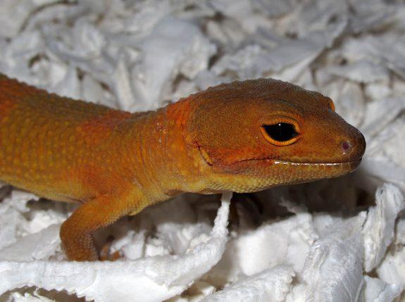 The all black eyes of Mandarin Tangerine Noir Desir male