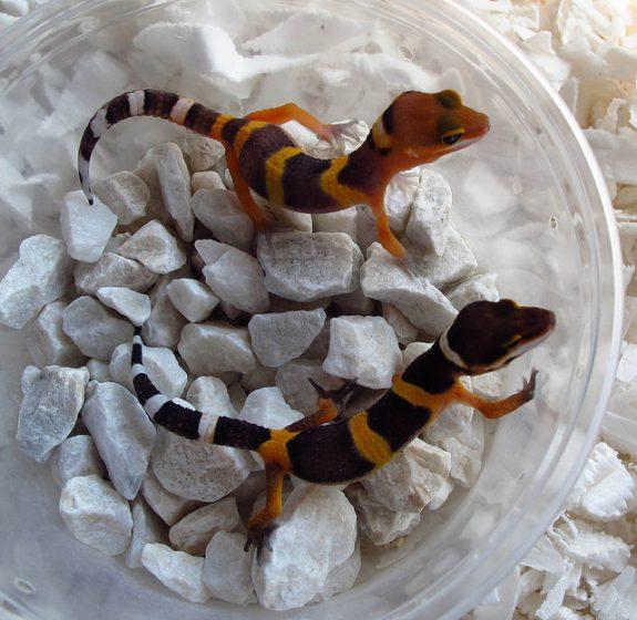 Mandarine Tangerine Noir Desir Superblood Cross on the bottom with its clutch mate