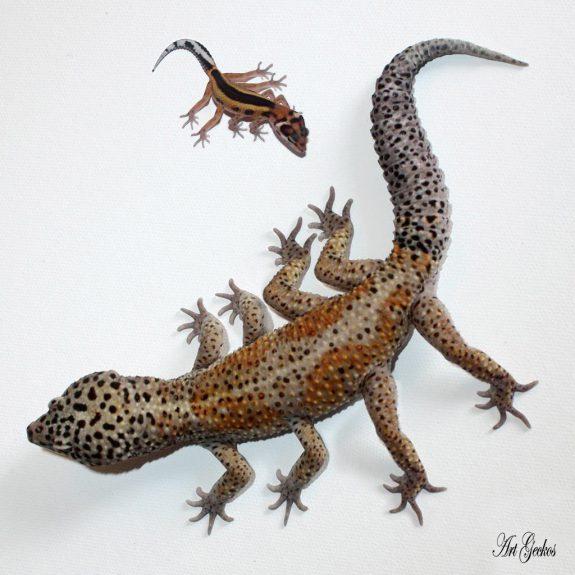 Spider Gecko by Ben Bargen