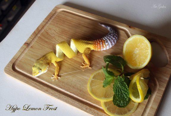 Hypo Lemon Frost by Ben Bargen
