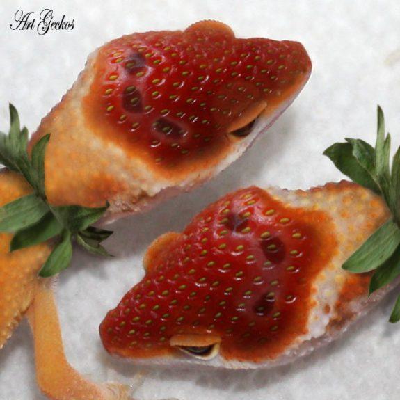 Strawberry enigmas by Ben Bargen